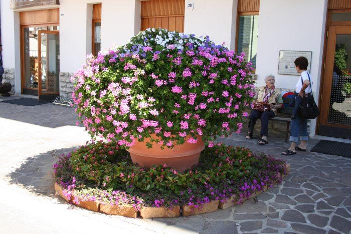 фото Фолгарии в цветах